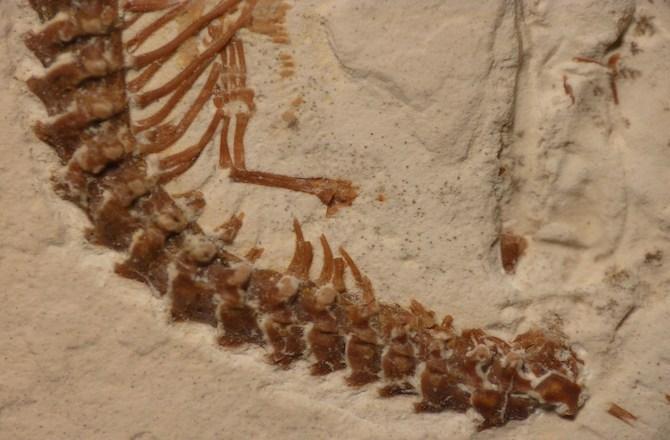 Archeological Evidence For Snakes Having Legs