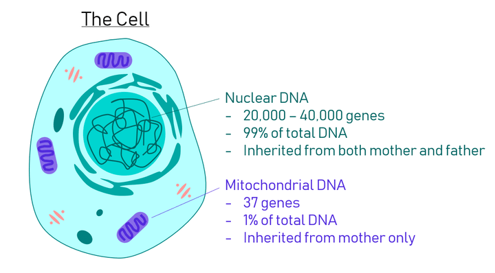 Human origins: Created, or evolved? Scientific-Evidence-For-Mitochondrial-Eve-1