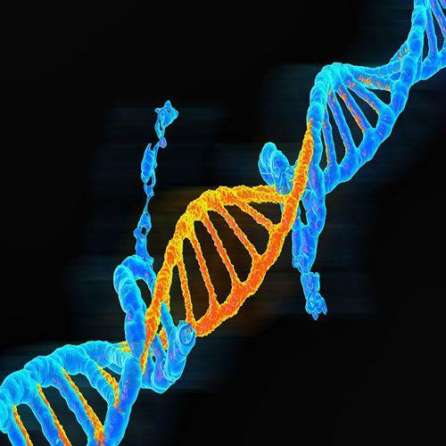 Scientific Evidence For DNA Proving GOD