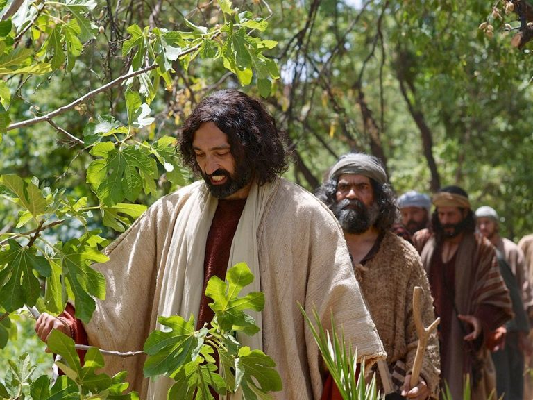 Exegetical Evidence For Jesus Cursing The Fig Tree